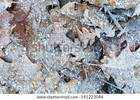Frozen autumn leaves on snow with ice crystals.