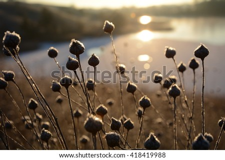 Frozen Beings  Slowly calmly rising sun. Frozen wind and all other beings stilled by frost. Only soundless prayers mingling together in a mystical dance and rising high above the sparkling fields. - stock photo