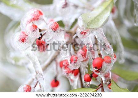 frozen berries - stock photo