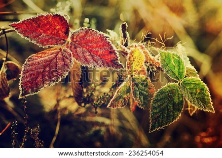 Frozen blackberry autumn leaves, seasonal vintage winter  background, macro image - stock photo