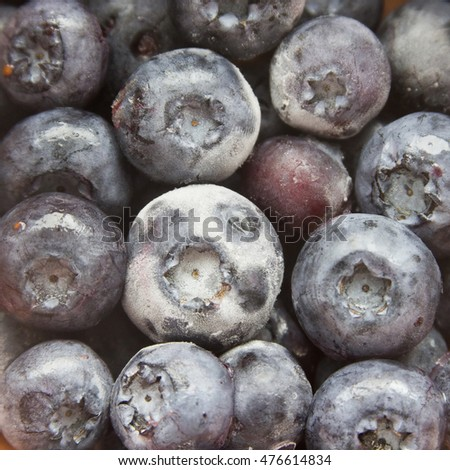 frozen blueberry or bilberry square background
