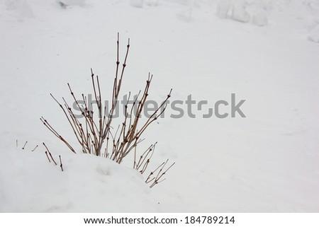 Frozen bush - stock photo