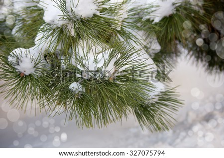 Frozen coniferous branches covered with winter snow. Trendy selective focus with shallow depth of field