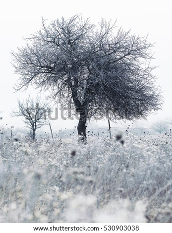 Frozen field with frozen flowers