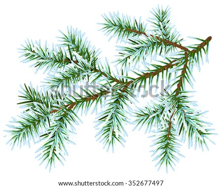 Frozen fir branch. Isolated on white illustration