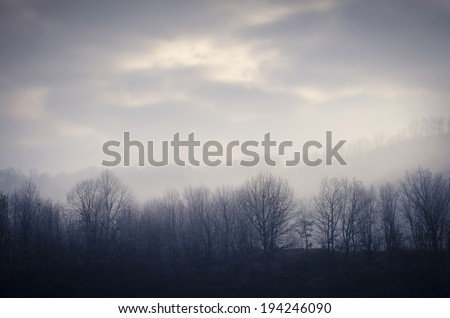 frozen forest in cold morning with mist and clouds on the sky  - stock photo