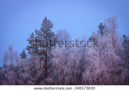 frozen forest in the hoarfrost - stock photo