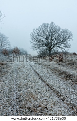 Frozen forest on a very cold day - stock photo