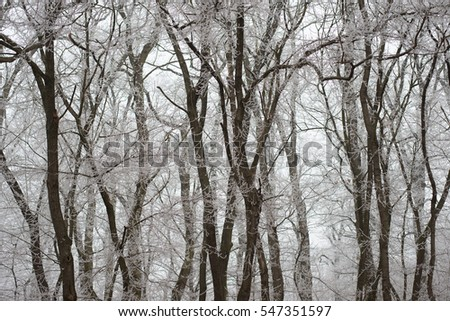 Frozen forest, tree branch
