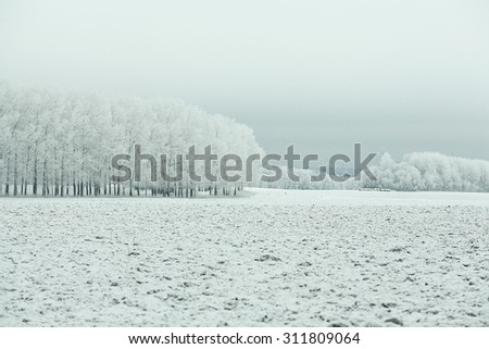 frozen grass and ground frost in winter - stock photo