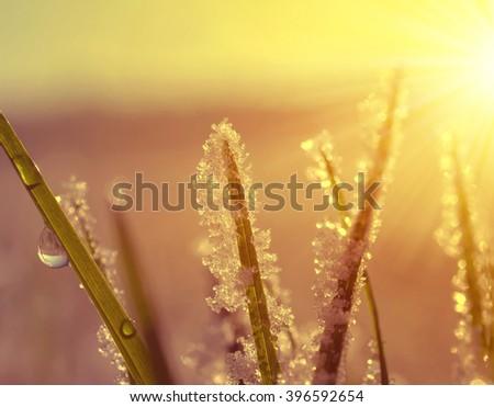 Frozen grass close up at sunrise. Nature background. - stock photo