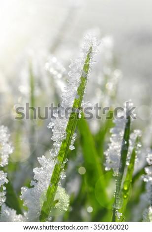 Frozen grass close up. Nature background. - stock photo