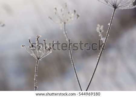 Frozen grass in a snowy background on winter with ice and snowflakes