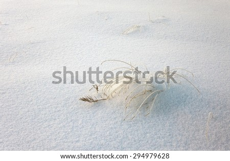 Frozen grass in sunshine in cold winter - stock photo