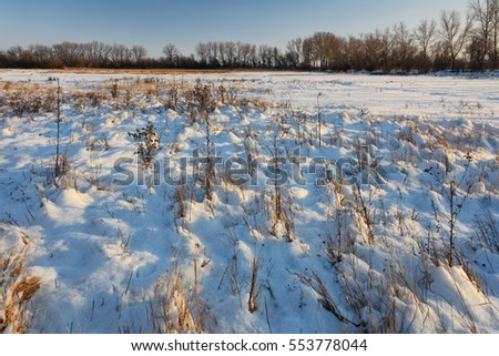 Frozen lake and a meadow in Neusiedler national park, eastern Austria.