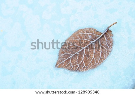 Frozen Leaf 3 - stock photo
