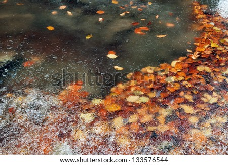 Frozen leaves in a mountain river
