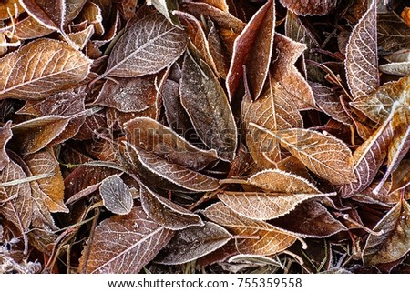 Frozen leaves in autumn
