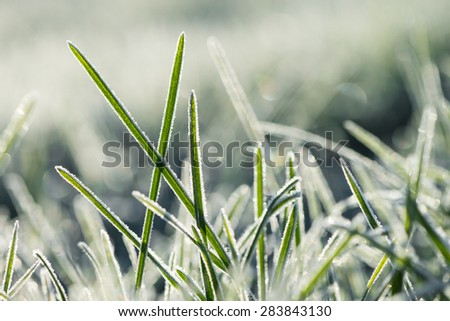 Frozen morning grass - stock photo