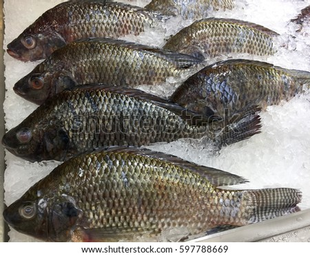 Frozen nile tilapia fish pile ice stock photo 597788669 for What is tilapia fish