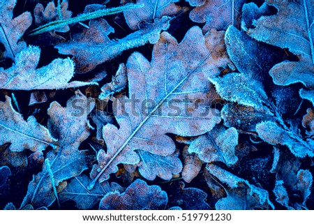 Frozen oak leafs - nice abstract natural background