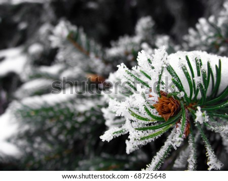 Frozen pine branches in the snow - stock photo