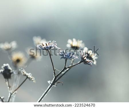 frozen plant first autumn freezing - stock photo