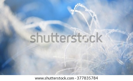 Frozen plants in winter with the hoar-frost - stock photo