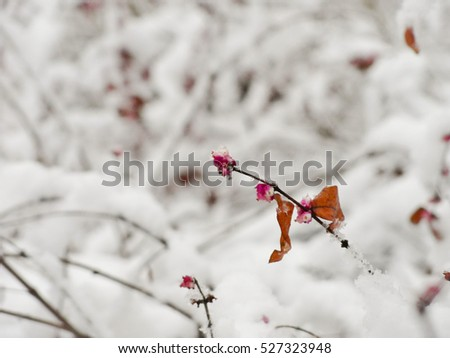 Frozen red berry plant