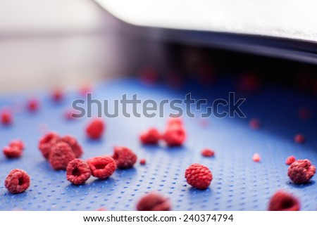 frozen red raspberries in laser sorting and processing machines, notice shallow dept of field - stock photo