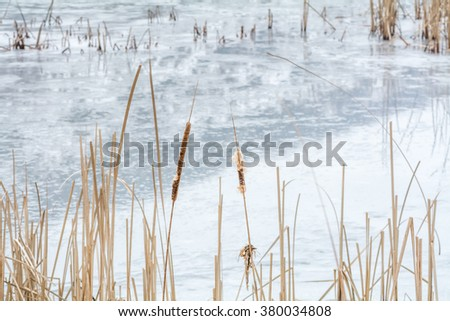 Frozen reeds over icy lake. Snowy winter landscape with dry frozen reeds on the shoreline. - stock photo