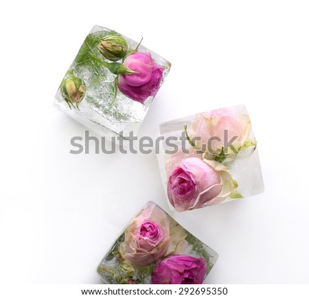Frozen rose in ice cube - stock photo
