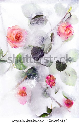 Frozen roses - stock photo