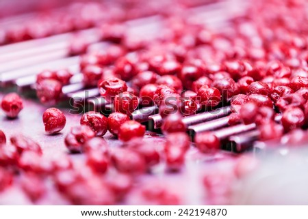 frozen sour cherries in sorting and processing machines - stock photo