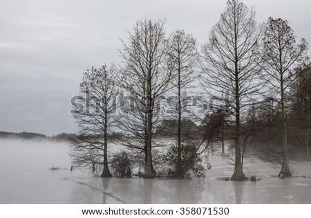 Frozen Stumpy Lake in Virginia Beach, Virginia in fog.  - stock photo