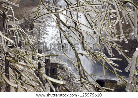 Frozen Tree Along Hiking Path to Multnomah Falls in Columbia River Gorge Oregon in Winter - stock photo