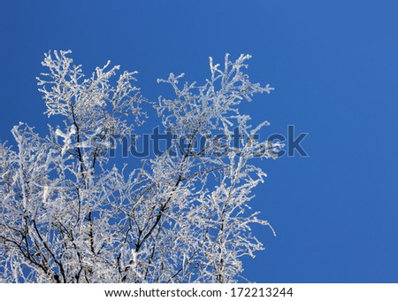 Frozen tree branches against clear blue winter sky