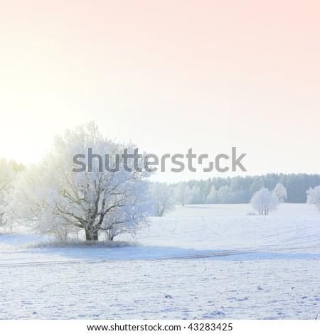 Frozen tree on field under sunlight - stock photo