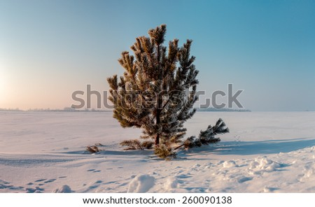 Frozen tree on winter field and blue sky - stock photo
