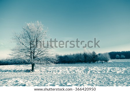 Frozen tree on winter field and blue sky.Toning image. - stock photo