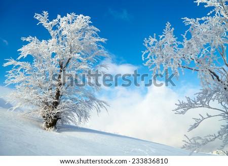 Frozen tree on winter field. Blue sky background - stock photo
