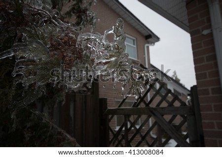 Frozen Tree Wrapped in ice - stock photo
