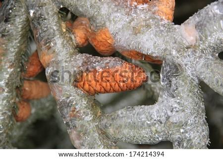 Frozen trees after Freezing Rain Storm, Ontario, Canada. - stock photo