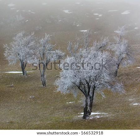 Frozen trees in fog - stock photo