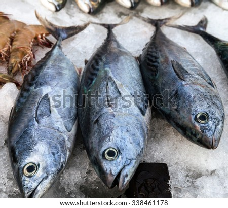frozen tuna fish on ice at market for sale seafood