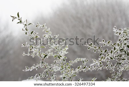 Frozen twigs in winter morning