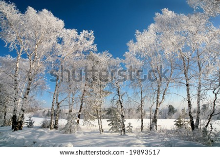 Frozen white forest on sunny blue sky