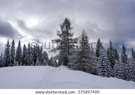 Frozen winter forest in the fog. Carpathian, Ukraine - stock photo