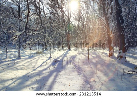 frozen winter forest snowfall - stock photo