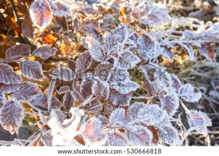 frozen winter leaves background